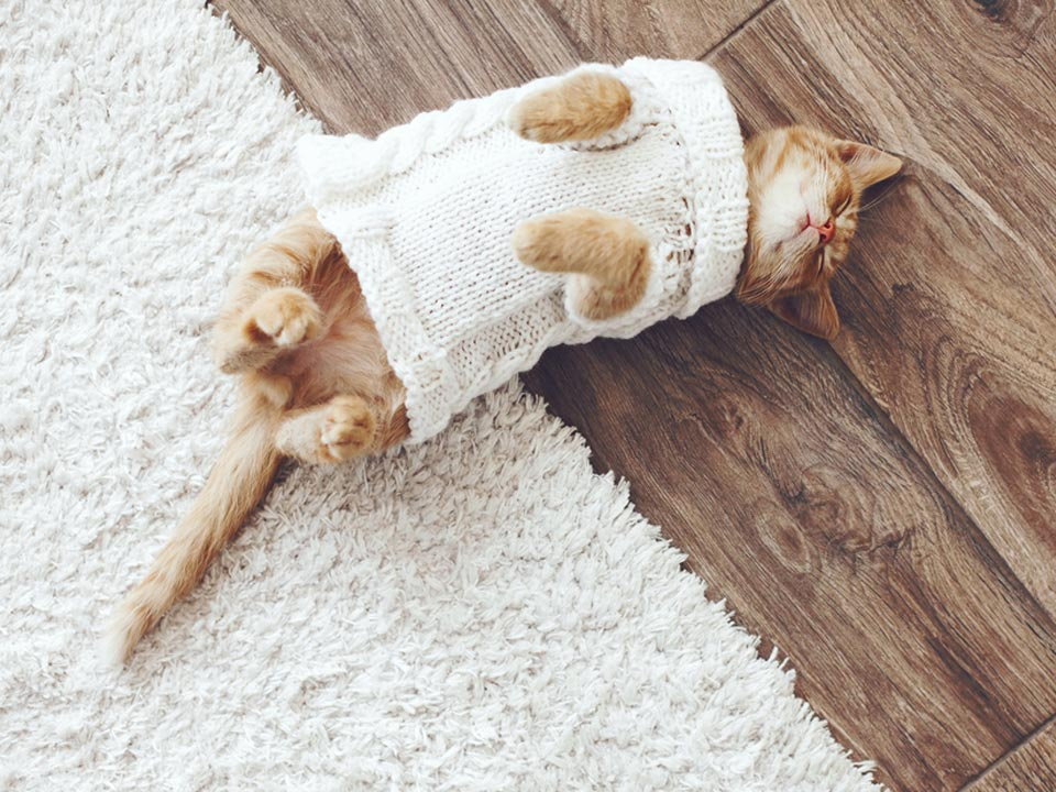 Picture of a cat sleeping on a hardwood floor