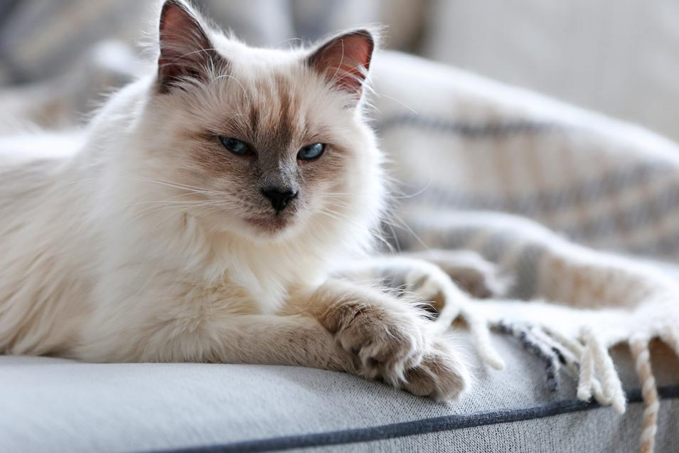 The Best Pet Friendly Sofas U2013 Furniture That Can Stand Up To Dog And Cats
