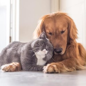Picture of a cat and a dog together