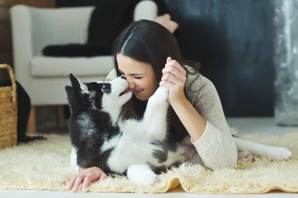 Picture of Husky dog and a girl in the living room