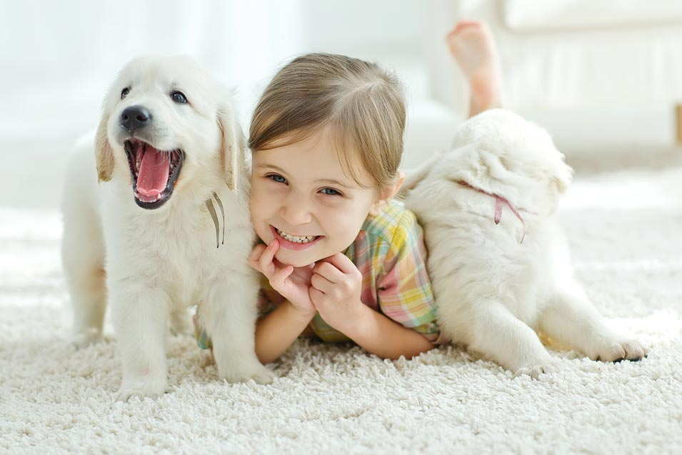 How To Clean Pet Stain On A Carpet Naturally