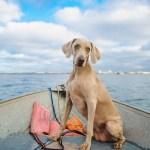 Image of a dog on a fishing boat