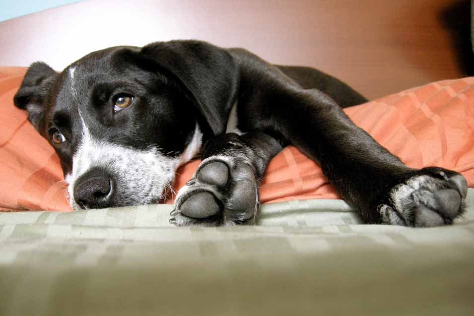 Picture of a dog laying on the bed
