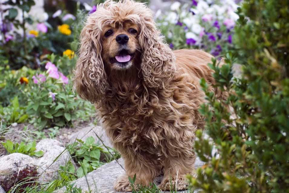 Picture of dog in the garden