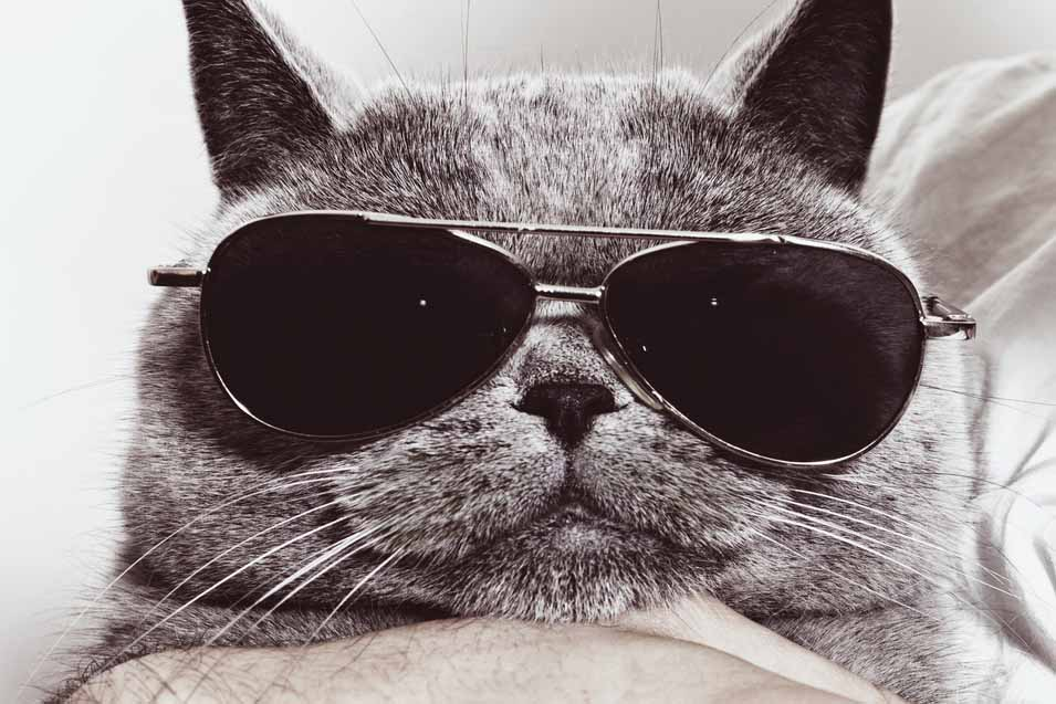 Picture of cat wearing sunglasses