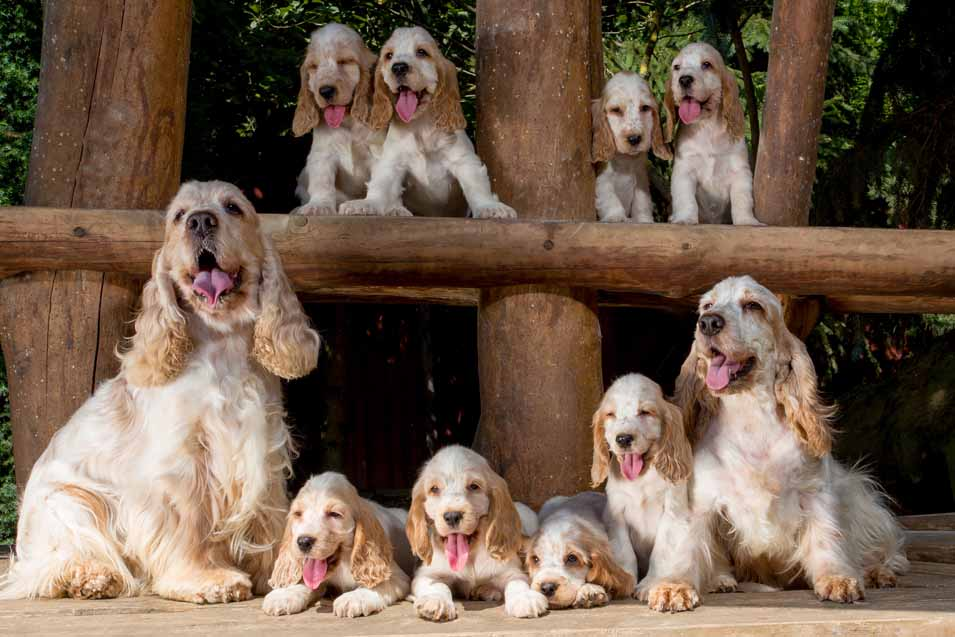 Picture of a family of dogs