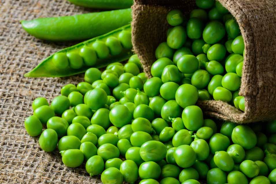 Picture of garden peas