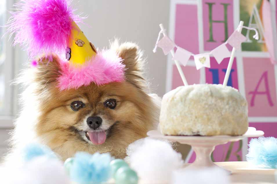 Picture of a dog wearing a birthday hat