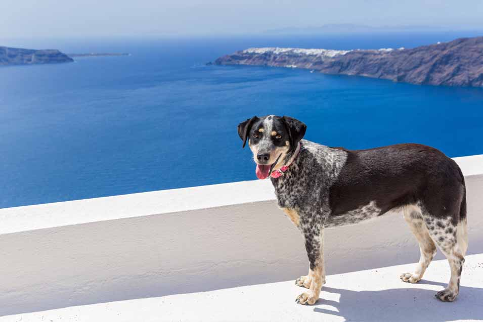 Picture of dog in Greece next to the ocean