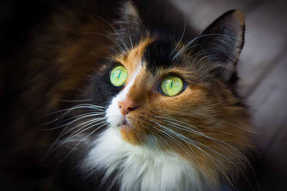 Picture of cat with green eyes