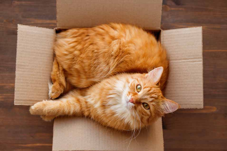 Picture of cat in a box