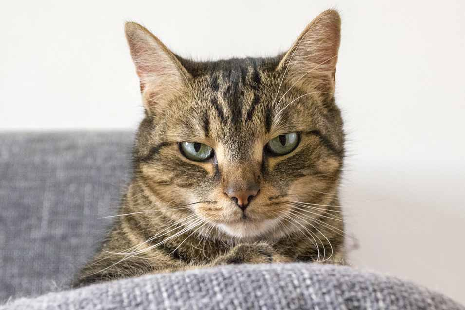 Picture of cat on the sofa