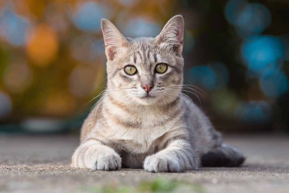 Picture of a grey cat outside
