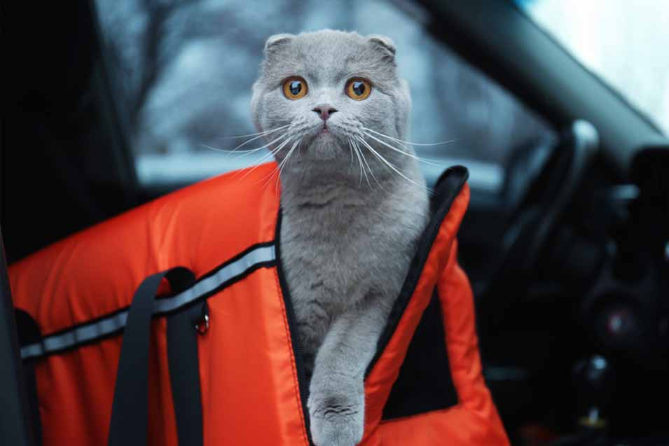 Picture of cat in a orange carrying case