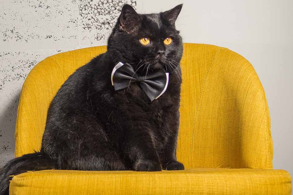 Picture of a black cat sitting on a yellow chair