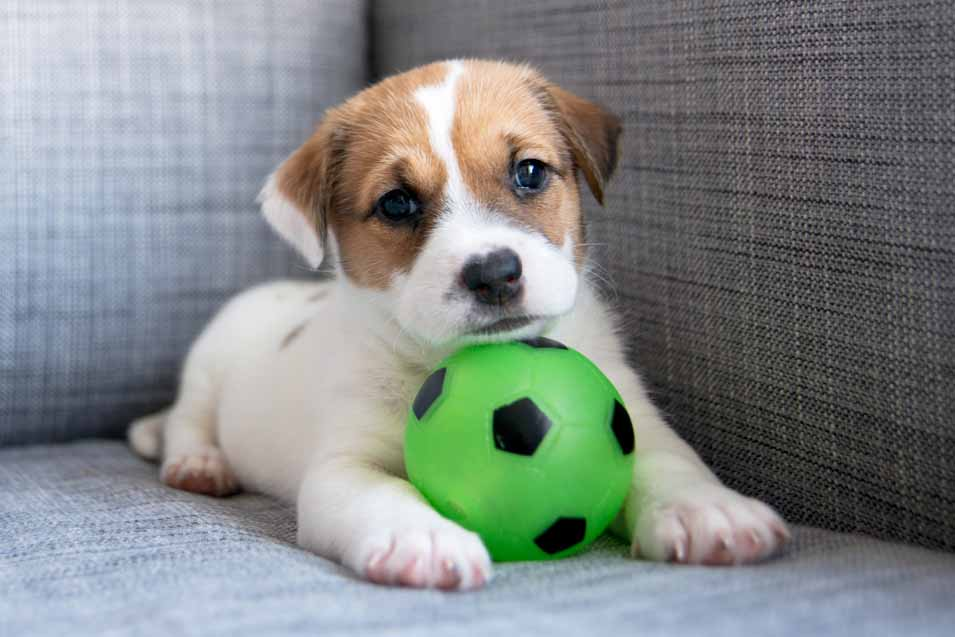 Picture of puppy on a sofa with a ball