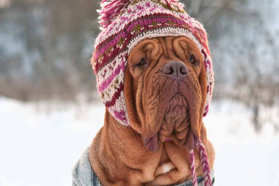 Picture of a Dog Wearing a Funny Hat