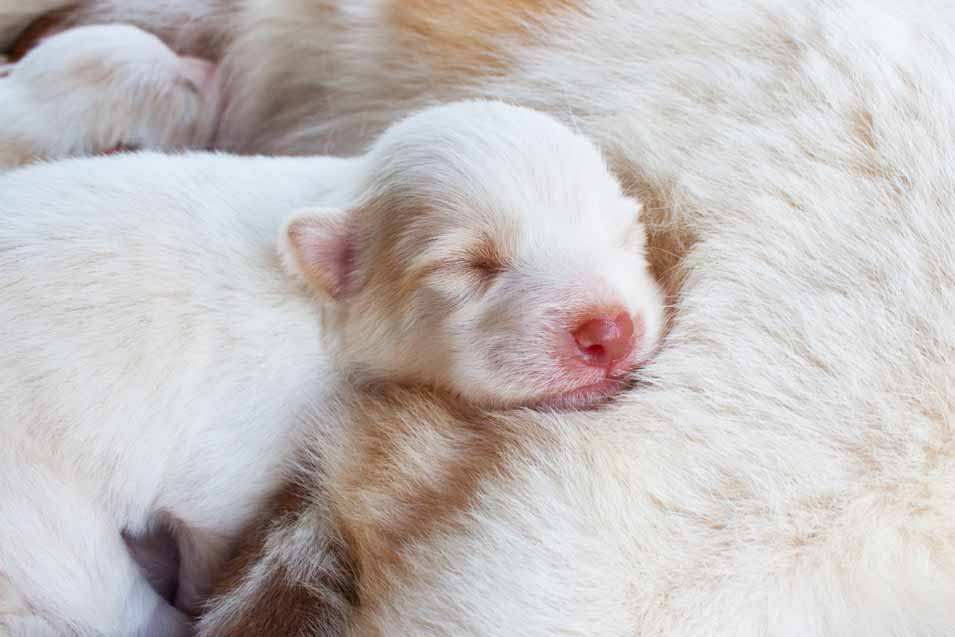 Picture of a newborn puppy