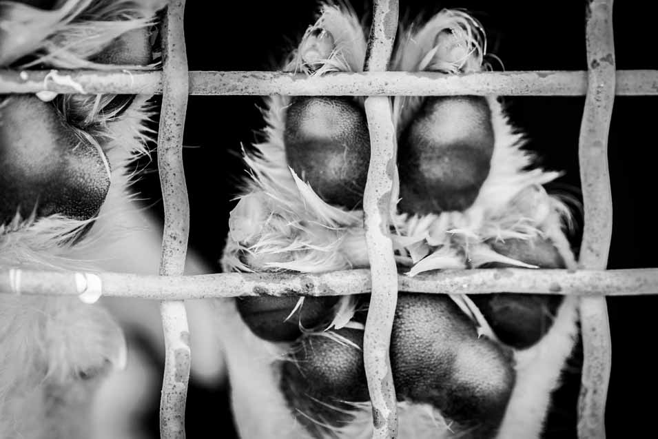 Picture of a dogs paw at an adoption center