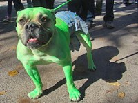 incredible hulk dog costume - Petful