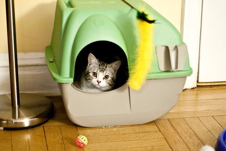 Image result for Can You Train a Cat to Go Potty Outside?