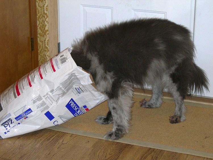 Photo of a dog with head inside a dog food bag