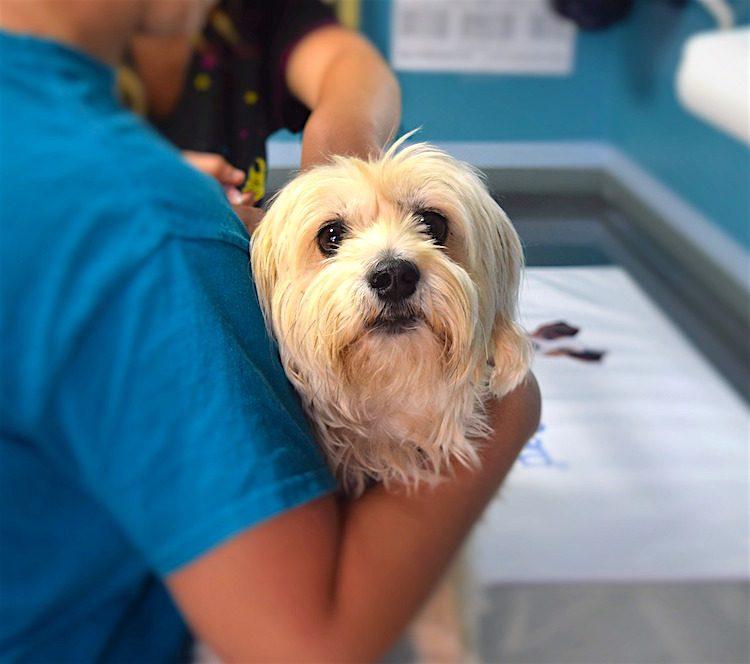 should i vaccinate my pet