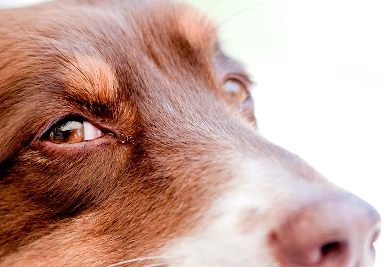 Why Your Dog Has Mucus in the Eyes (And When to See the ...