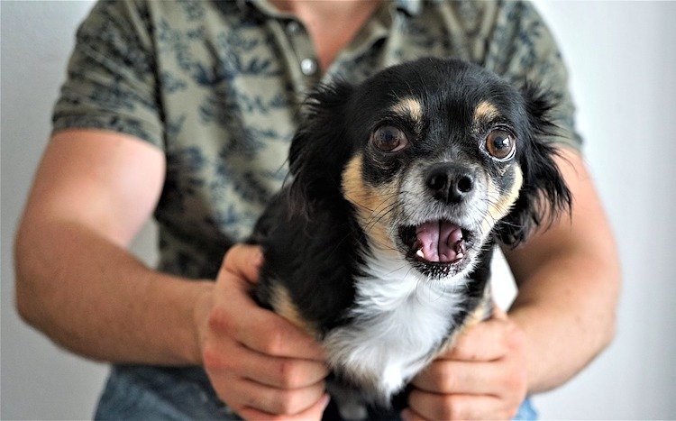 How to Prevent Fear-Based Aggressive Behavior in Your Dog