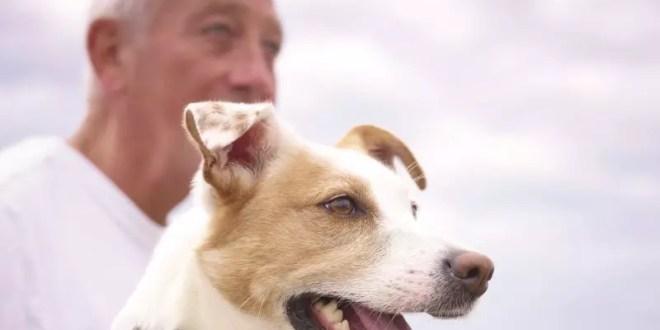 PetSafe, pets