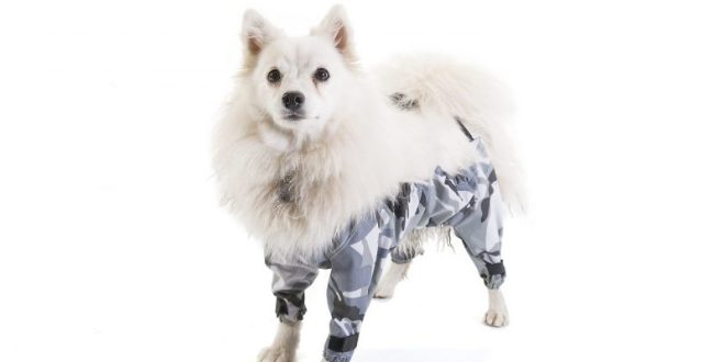 Dog Trousers