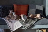 Luxury dog bedding company awarded for entrepreneurship ...