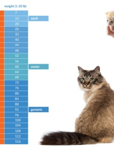 Cats age chart how old is your cat in people years also gungoz  eye rh