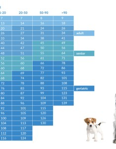 Dog age chart also how old is your in people years rh pethealthnetwork