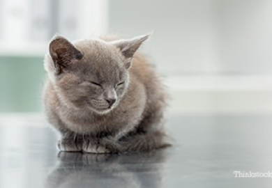Health Resources For Cats Pet Health Network Pet