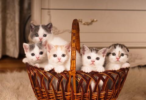 what is kitten season