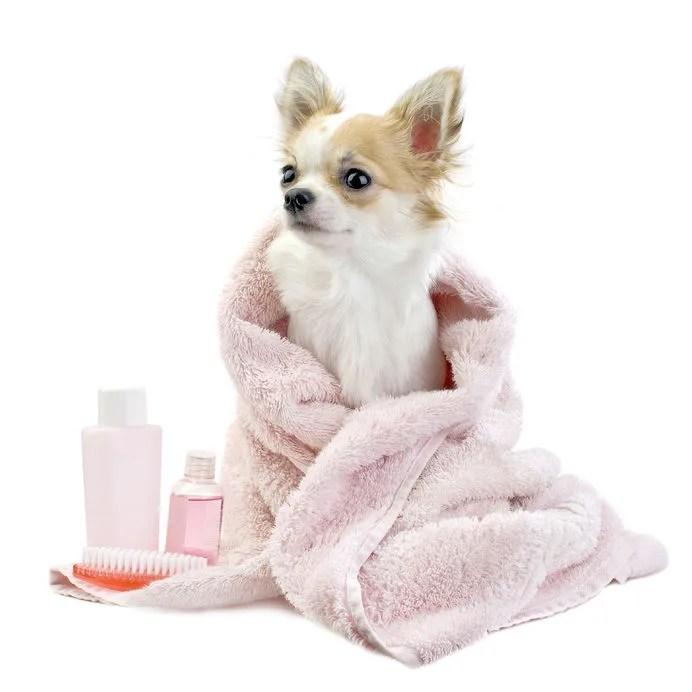 ステロイドの処方に不安を感じる犬の薬事情