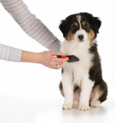 犬のケアアイテム