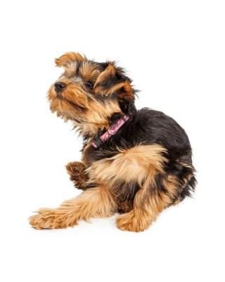 犬の金属アレルギー 食器や首輪の金具に注意