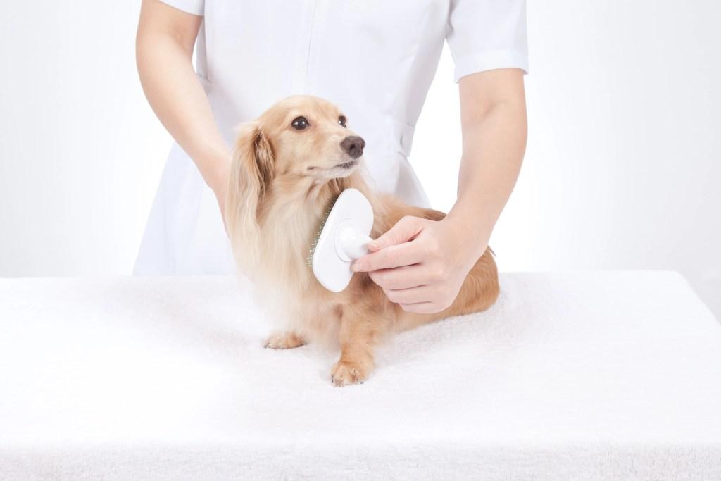 長毛種の犬の抜け毛対策ブラッシング