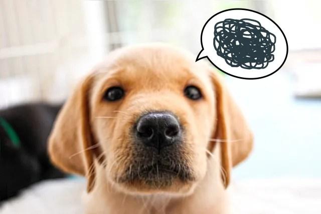 犬のアトピー性皮膚炎やアレルギー