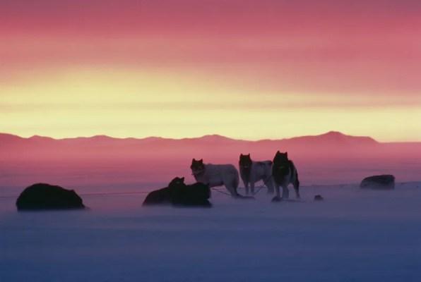 南極物語のタロとジロ