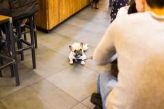 犬と一緒にスタバに行こう!