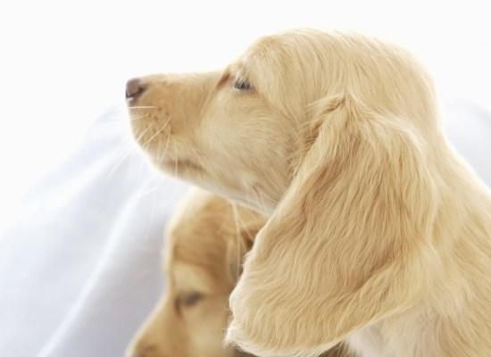 犬の乾燥肌
