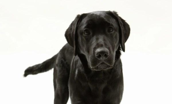 犬の肛門腺ケア