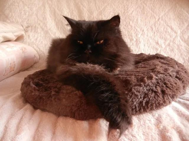 長毛種の猫の目ヤニ対策