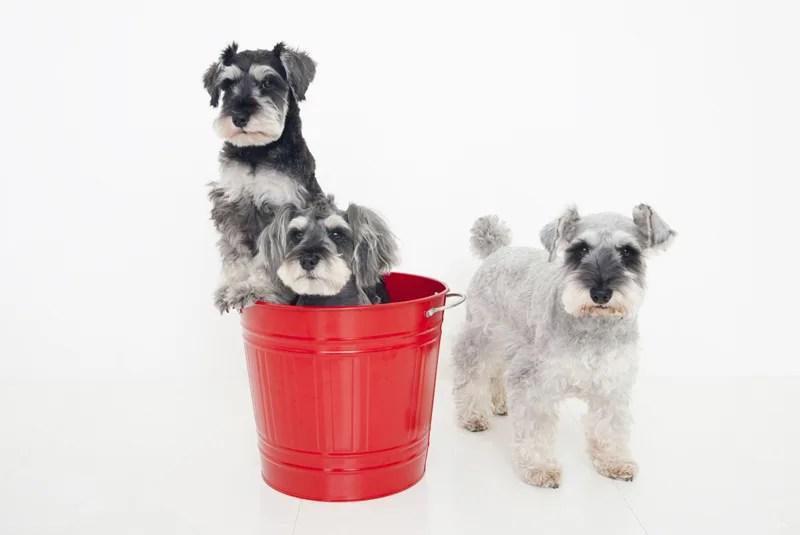 犬のマイクロバブル洗浄