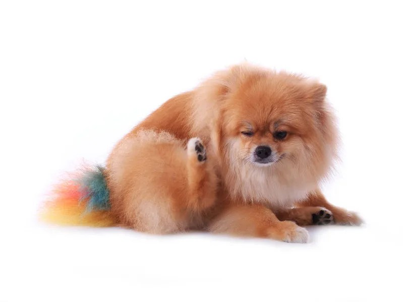 犬の痒みの3タイプ_2