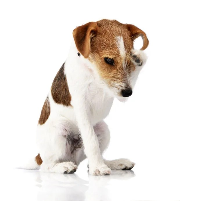犬の痒みの3タイプ