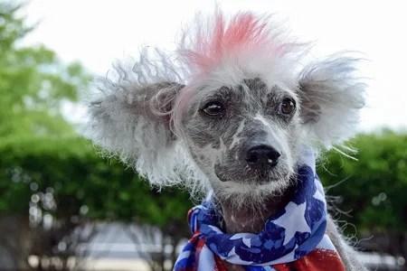 犬のインスタ映え 犬のカラーリング